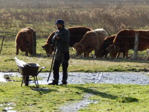 Hofsafari und die Rinder