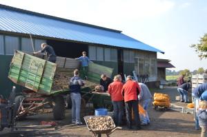 Hofsafari beim Kartoffeln sortieren