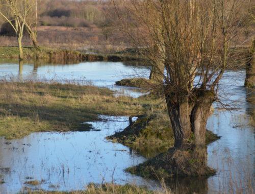 Hochwasser Lippe