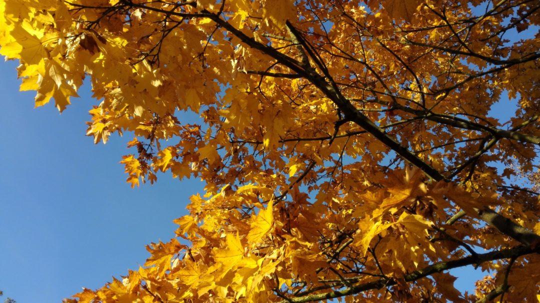 Herbstschätze