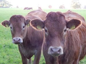 Tiere essen Bauernhof