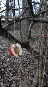 Weihnachten für die Vögel Vogelfutter im Apfel